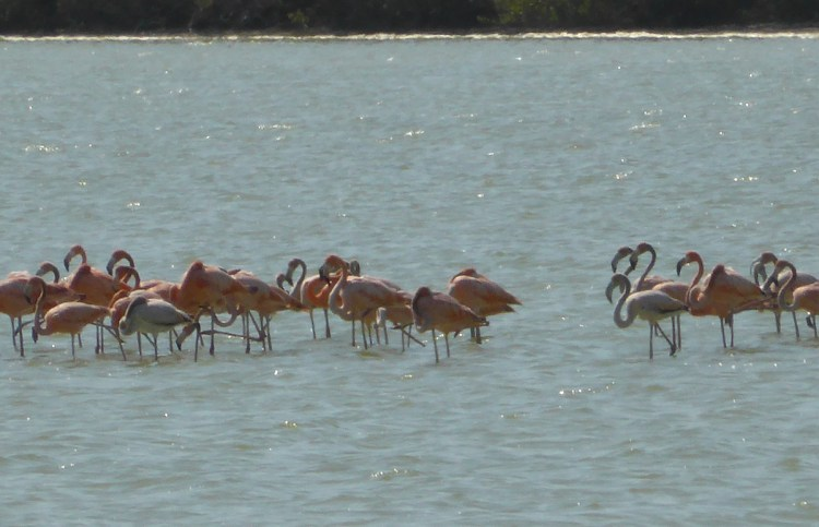 Flamingos spotted.