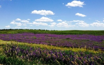Nebraska's Nicest #8 – Wildflowers & Prairie Grasses