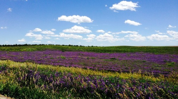 Nebraska's Nicest #8 – Wildflowers & Prairie Grasses