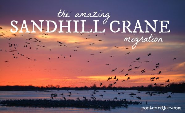 Our first trip to see the Sandhill Crane migration on the Platte River in Nebraska