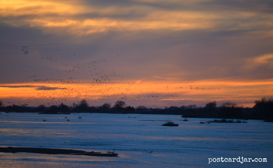 The view from our blind as we watched the sun to set and waited for the large swarms of birds to arrive.