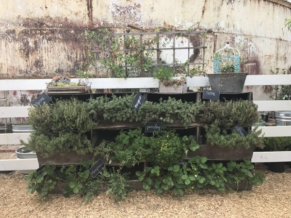 Magnolia Market herbs