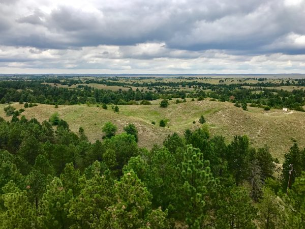 View from tower, Nebraska National Forest