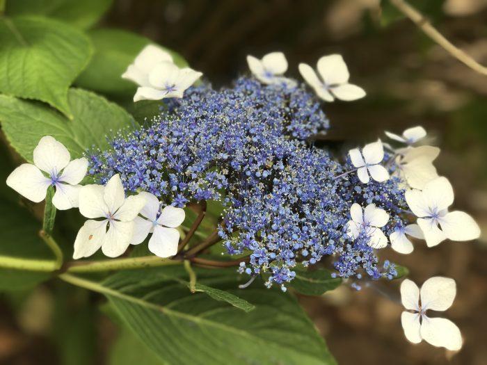 Flower in Astoria, Oregon