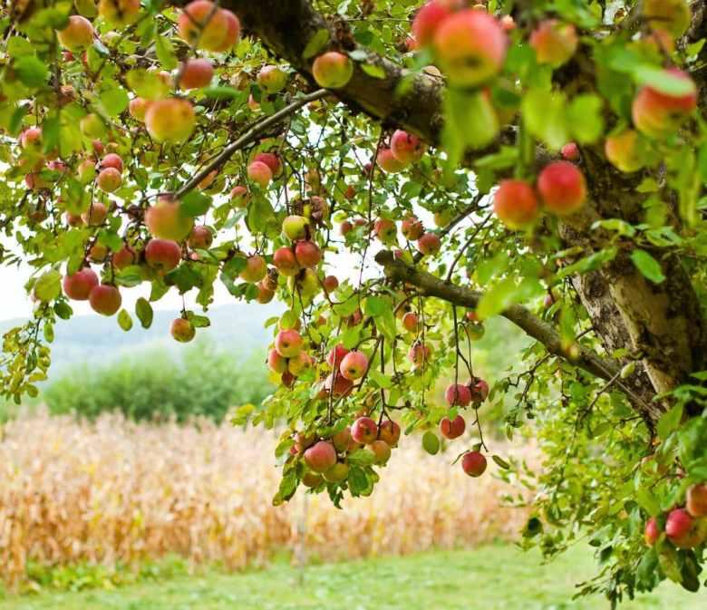 Best Apple Orchards near Milwaukee, Wisconsin