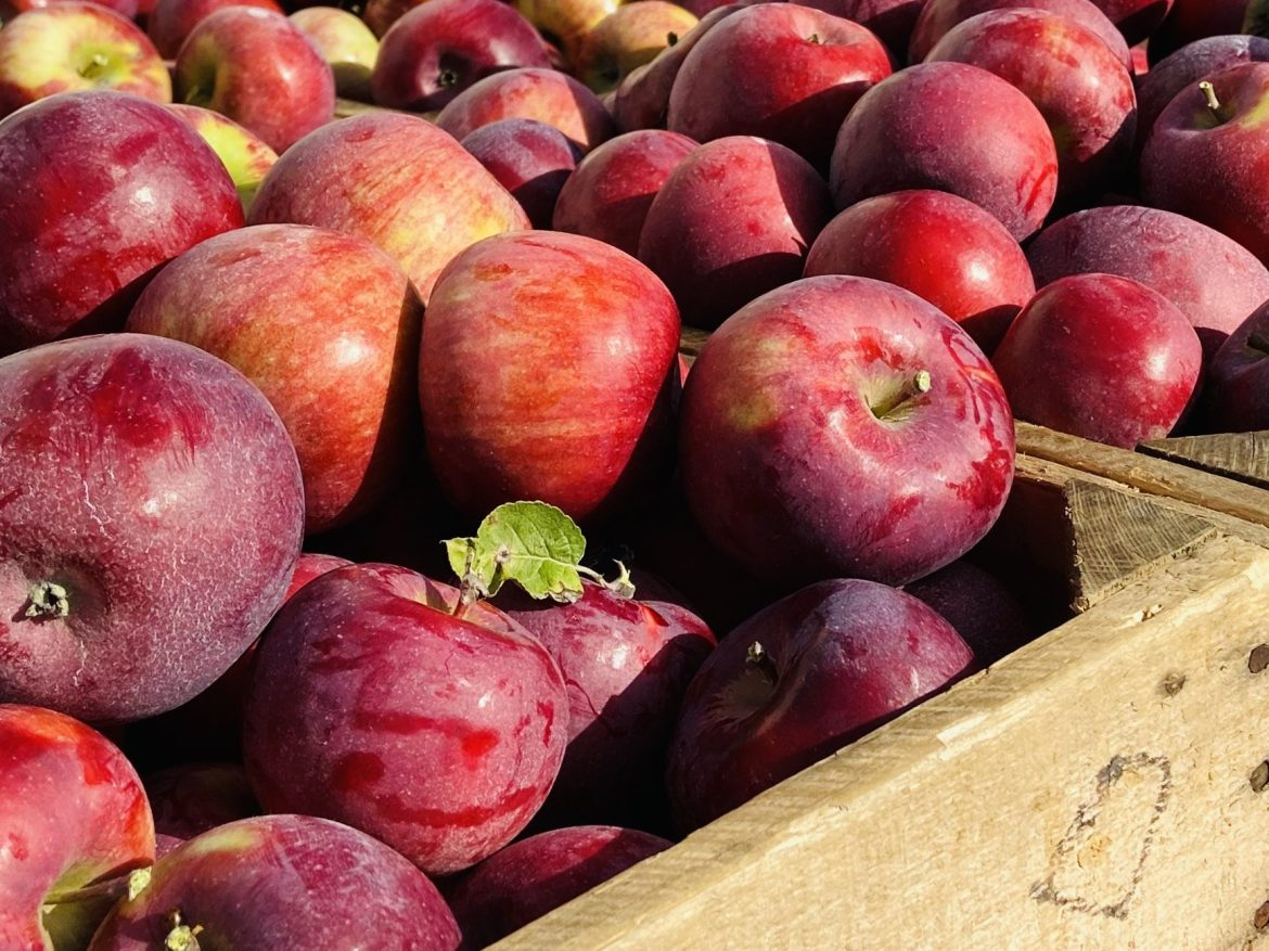 You had me at Honeycrisp. 8 Apple Orchard Trips from Milwaukee