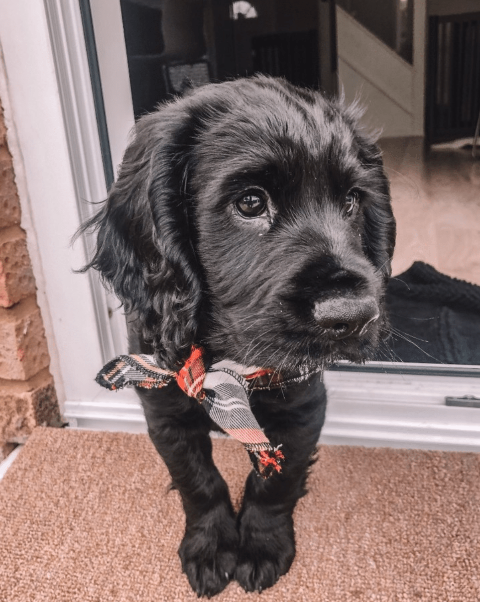 Week 1 of getting a puppy: What to expect