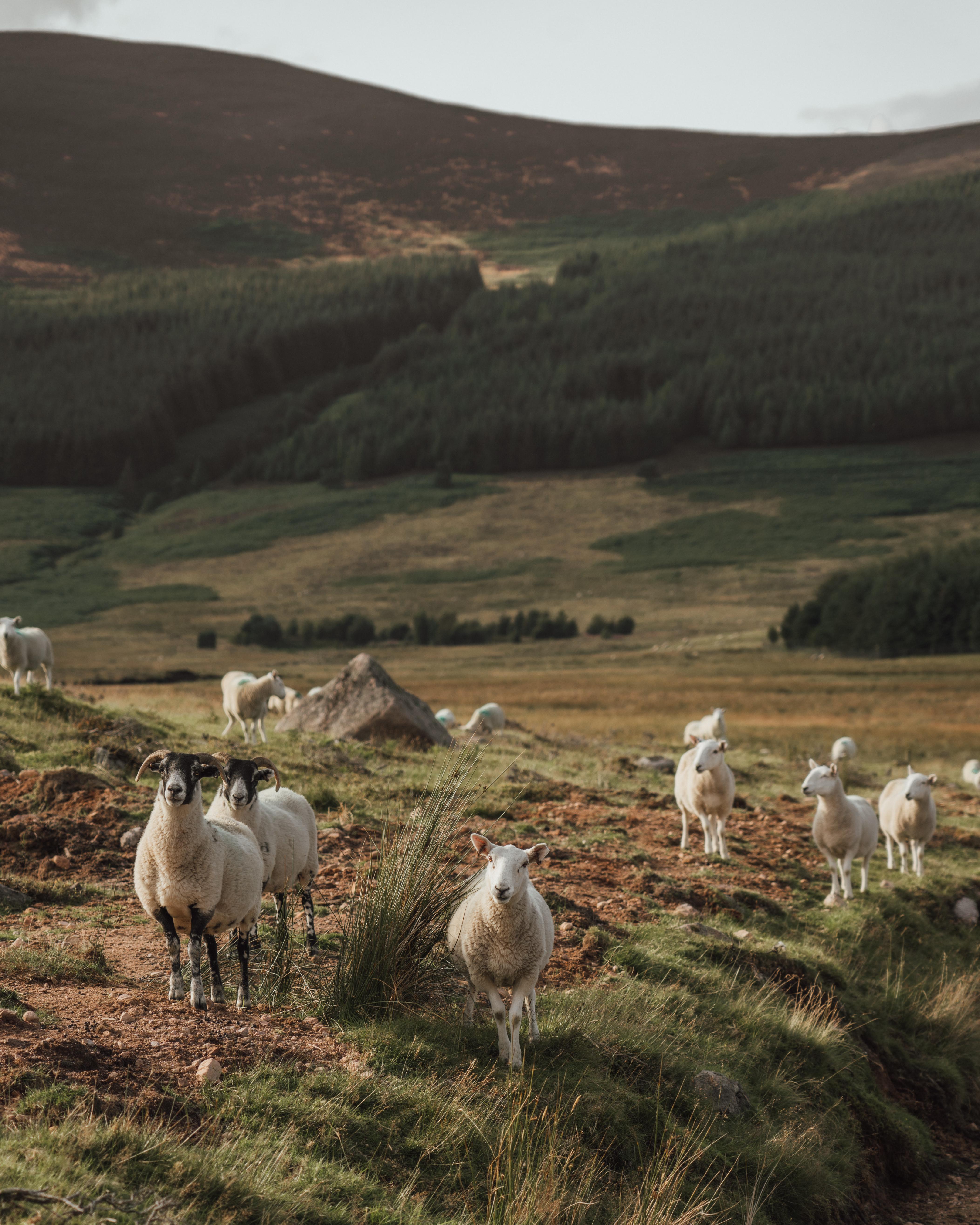 An Adventure in Aberdeenshire | Glen Dye EstateDSC04915-2