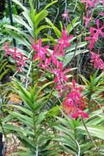 Botanic Garden, Singapore