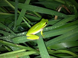 Frog photo iphone