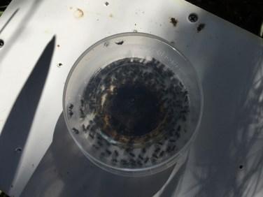 Honey Jar 2 (1280x960)