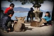 Playful children, tolerant deer