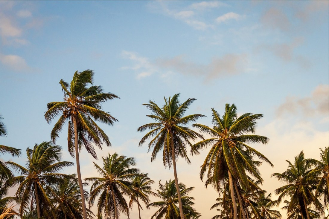 palm trees, warm places