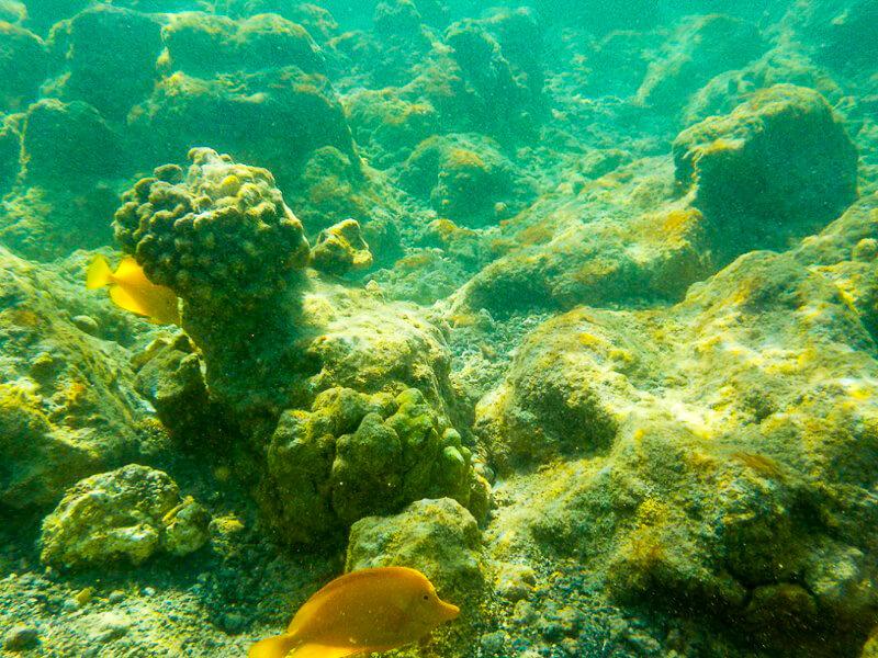 diving kona coast hawaii reef