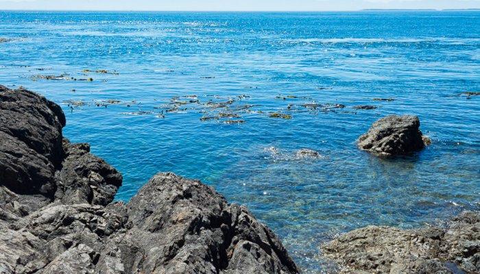 A Guide to Visiting San Juan Island