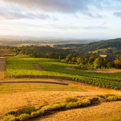 Exploring Willamette Valley Wine Country