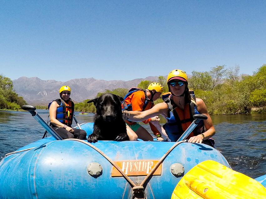 salta rafting dog