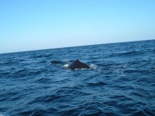 Sighted a humpback whale!