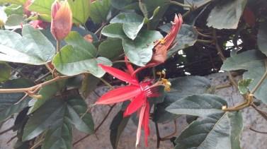 A local flower