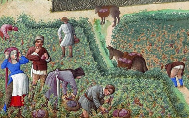Man and women working the grape harvest. The women are in their cotes and the men are in tunics and short hose. c. 1416