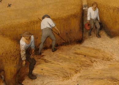 Peasants harvesting, 1565