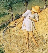 Peasant reaping in linen braies and shirt. c 1412–1416.