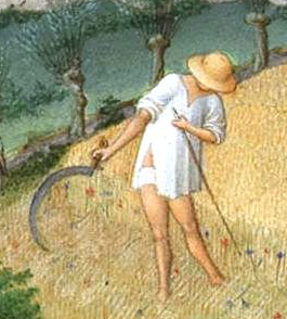 Peasant reaping in linen braies and shirt and straw hat. c 1412–1416
