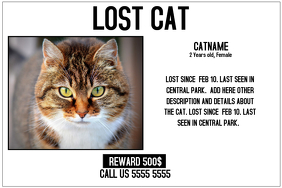 Lost Cat Flyer Template. missing cat poster how to make a lost cat ...