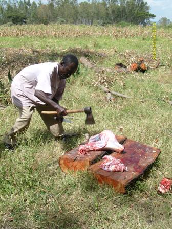 Slaughtering a goat for the visitors