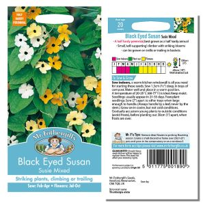 Mr. Fothergill's Seeds - Black Eyed Susan - Susie Mixed
