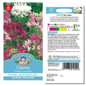 Mr. Fothergill's Seeds - Cleome Colour Fountain