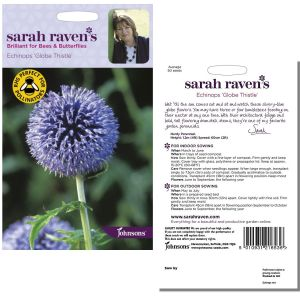 Sarah Raven's Echinops 'Globe Thistle' Seeds by Johnsons