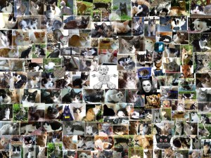 A collage of cat photos, of cartoon cats, and of women in cat costumes.