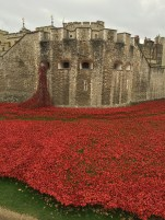 the kollektive tower of london poppies
