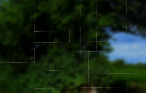 Spider enters cubist phase