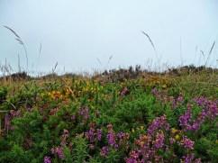 La brughiera bretone