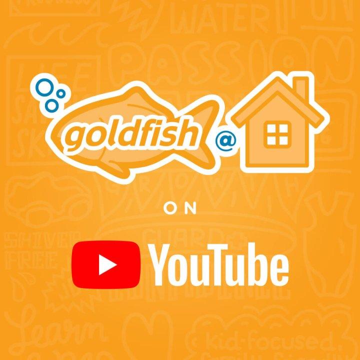 goldfish swim school at home youtube