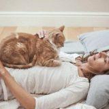 Što sve liječi mačka kad prede?