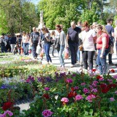 Preko 90% cvijeća se uvozi!