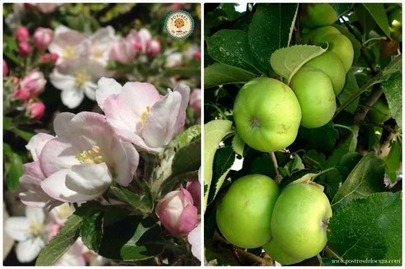 Flores y manzanas de mi jardin
