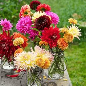 Always Keep Your Flowers Fresh