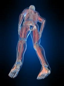 Le schéma corporel, notre carte mémoire