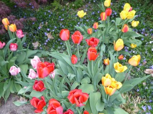 letting go -- my spring garden