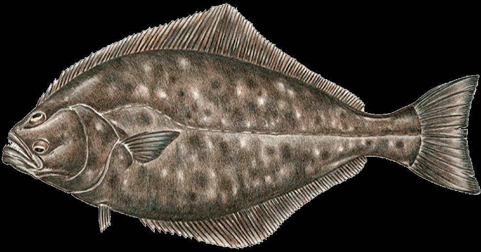Grill Pacific Fish Menu