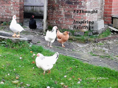 Hens in a yard