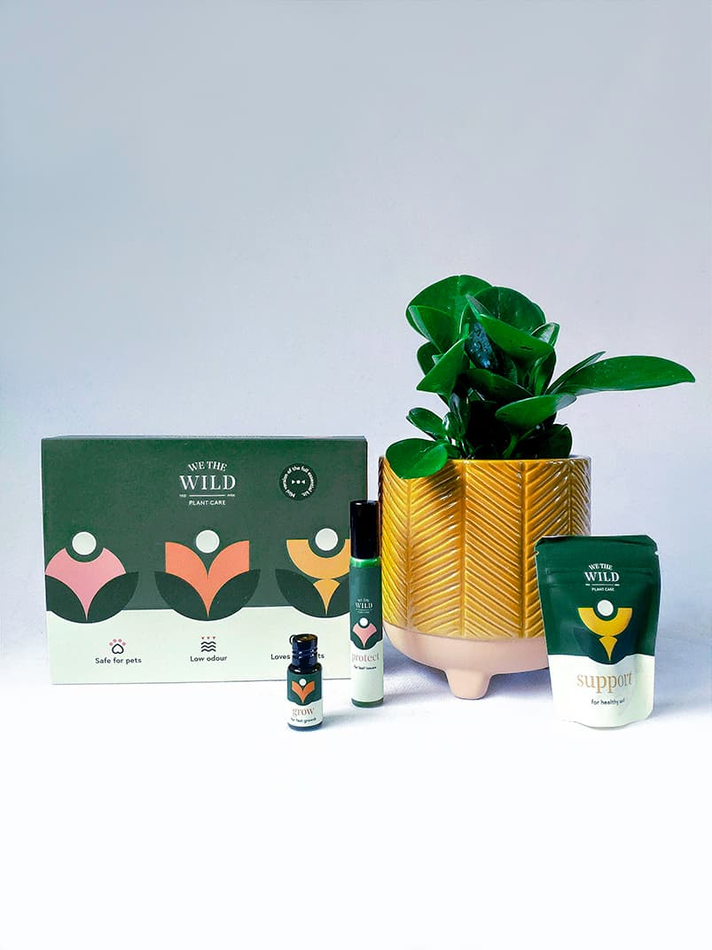 Noob's Mini Plant and Care Pack