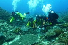 diving-bali-crystal-bay-nusa-penida