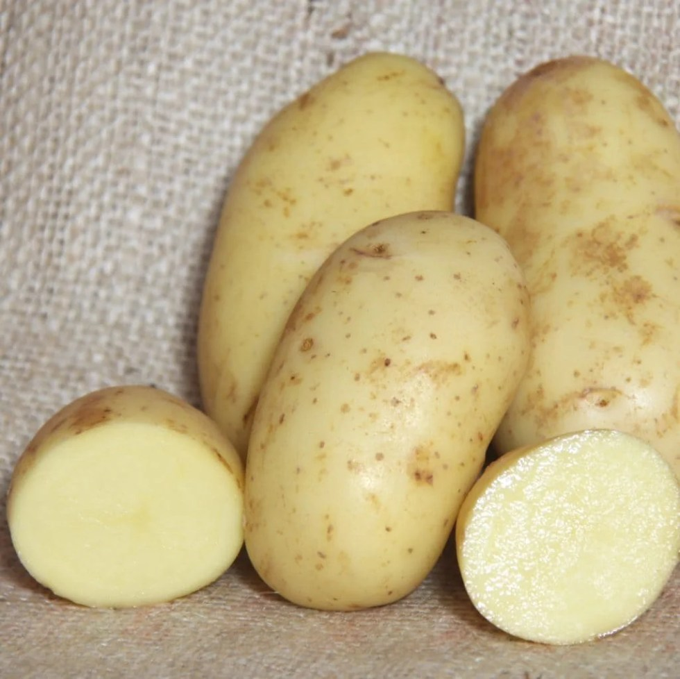 The Best Potato For Beginners to Grow