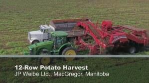 Manitoba potatoes