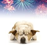 CBD Para Perros: La Marihuana Puede Calmar La Ansiedad Provocada Por Los Fuegos Artificiales